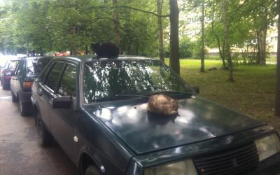 20 июля: в отличном настроении и в движе, но без девок! =) И о том, почему Навальный — это пустое место
