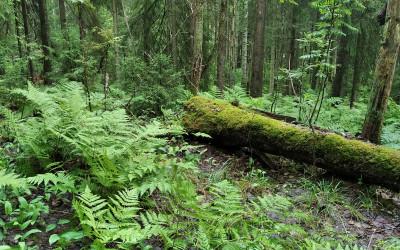 Первая поездка в лес: грибов — ни Души =))). От идеи обучения на массажиста решил отказаться (ОБНОВЛЕНО)